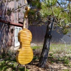 sunbathing.jpg prokop violin
